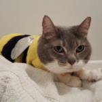 Lola animal adoption success story
